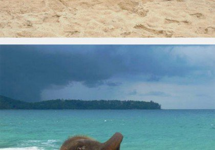cool-elephant-first-time-beach-sand