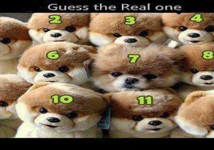 guess_real_dog