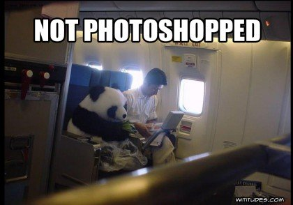 panda-diplomacy-airplane-not-photoshopped