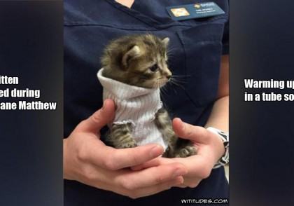 tiny-kitten-rescued-during-hurricane-matthew-warming-up-in-tube-sock-cute-picture