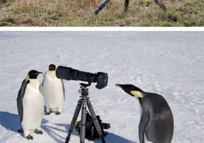animals-taking-pictures-photography