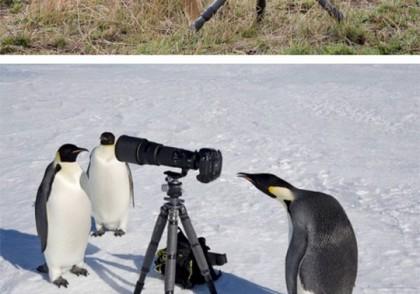 Animals Taking Photos