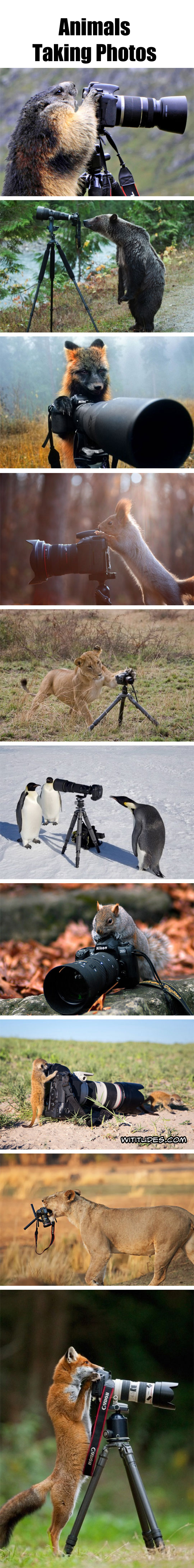Animals Taking Photos