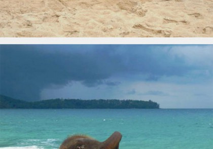 Baby elephant first time at the beach