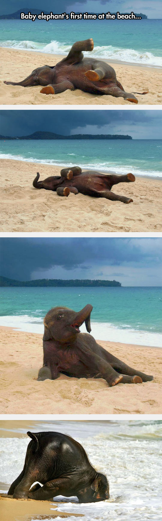Baby elephant first time at the beach photo series - Wititudes