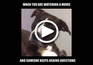 Dog Meme People Talking During Movies