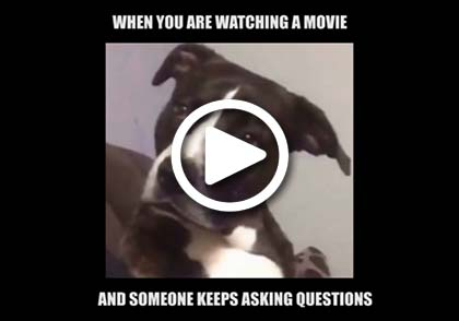 That dog face stare when you are watching a movie and someone keeps asking questions