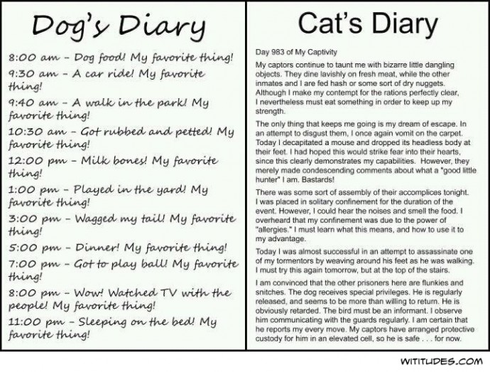 Dog's diary vs. cat's diary
