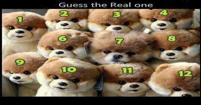 guess_real_dog