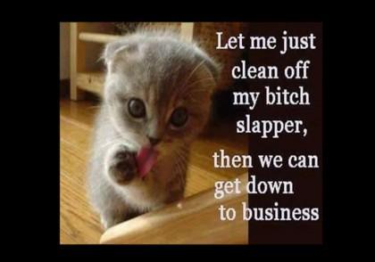 kitten-clean-off-bitch-slapper