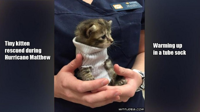 Tiny kitten rescued during hurricane