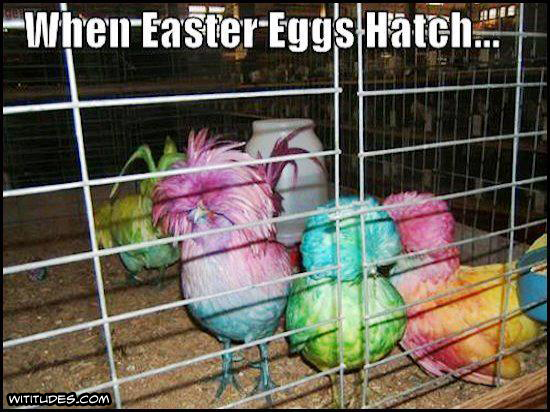 When Easter Eggs Hatch - colorful chickens